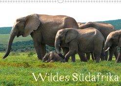 Wildes Südafrika – Lebendiges Kap (Wandkalender 2020 DIN A3 quer) von Stützle