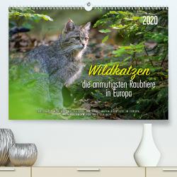 Wildkatzen – die anmutigsten Raubiere in Europa. (Premium, hochwertiger DIN A2 Wandkalender 2020, Kunstdruck in Hochglanz) von Gerlach,  Ingo