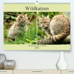 Wildkatzen – Die lautlosen Jäger des Waldes (Premium, hochwertiger DIN A2 Wandkalender 2021, Kunstdruck in Hochglanz) von Klatt,  Arno