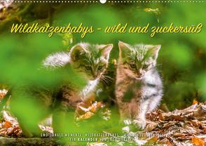 Wildkatzenbabys – wild und zuckersüß. (Wandkalender 2020 DIN A2 quer) von Gerlach,  Ingo