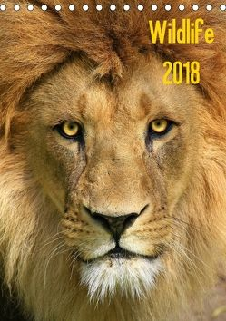 Wildlife 2018 (Tischkalender 2018 DIN A5 hoch) von Klingebiel,  Jens
