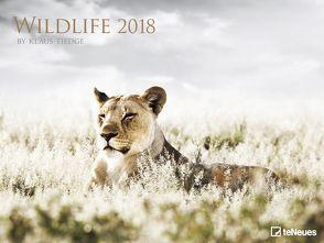 Wildlife 2018 von Tiedge,  Klaus