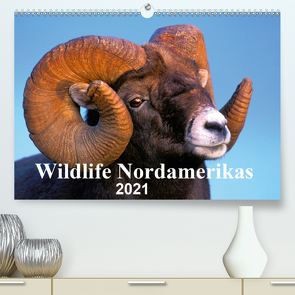 Wildlife Nordamerikas 2021 (Premium, hochwertiger DIN A2 Wandkalender 2021, Kunstdruck in Hochglanz) von KOPFLE,  ROLF