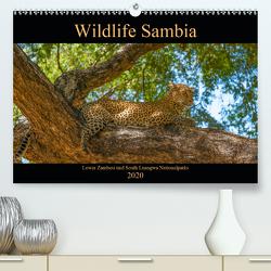 Wildlife Sambia (Premium, hochwertiger DIN A2 Wandkalender 2020, Kunstdruck in Hochglanz) von Photo4emotion.com