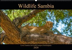 Wildlife Sambia (Wandkalender 2020 DIN A2 quer) von Photo4emotion.com