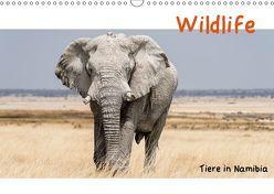 Wildlife – Tiere in Namibia (Wandkalender 2019 DIN A3 quer) von Kunert,  Matthias