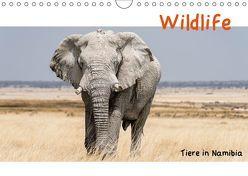Wildlife – Tiere in Namibia (Wandkalender 2019 DIN A4 quer) von Kunert,  Matthias