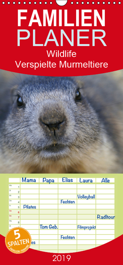 Wildlife – Verspielte Murmeltiere – Familienplaner hoch (Wandkalender 2019 , 21 cm x 45 cm, hoch) von Michel / CH,  Susan