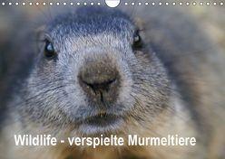 Wildlife – Verspielte Murmeltiere (Wandkalender 2019 DIN A4 quer) von Michel / CH,  Susan
