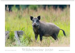 Wildschweine 2020 (Wandkalender 2020 DIN A2 quer) von Breuer,  Michael