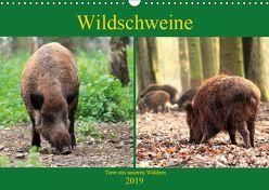 Wildschweine – Tiere aus unseren Wäldern (Wandkalender 2019 DIN A3 quer) von Klatt,  Arno