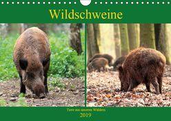 Wildschweine – Tiere aus unseren Wäldern (Wandkalender 2019 DIN A4 quer) von Klatt,  Arno