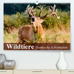 Wildtiere. Heimische Schönheiten (Premium, hochwertiger DIN A2 Wandkalender 2021, Kunstdruck in Hochglanz) von Stanzer,  Elisabeth