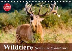 Wildtiere. Heimische Schönheiten (Tischkalender 2019 DIN A5 quer) von Stanzer,  Elisabeth
