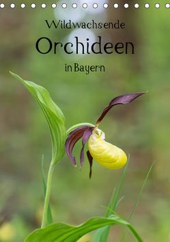 Wildwachsende Orchideen in Bayern (Tischkalender 2019 DIN A5 hoch) von Birzer,  Christian