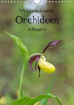 Wildwachsende Orchideen in Bayern (Wandkalender 2019 DIN A4 hoch) von Birzer,  Christian