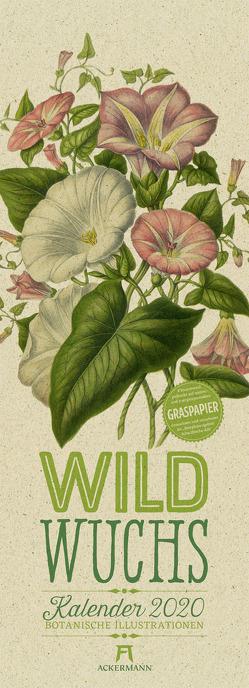 Wildwuchs – Botanische Illustrationen – Graspapier-Kalender 2020 von Pratt,  Anne