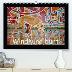 Windhund bunt (Premium, hochwertiger DIN A2 Wandkalender 2020, Kunstdruck in Hochglanz) von Köntopp,  Kathrin