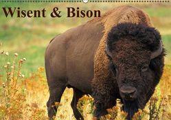 Wisent & Bison (Wandkalender immerwährend DIN A2 quer) von Stanzer,  Elisabeth