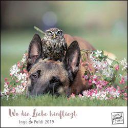 Wo die Liebe hinfliegt 2019 – Schäferhund Ingo & Steinkauz Poldi – Wandkalender mit Spiralbindung – DuMont Quadratformat 24 x 24 cm von Brandt,  Tanja, DUMONT Kalenderverlag