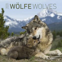 Wölfe 2020 – Wolves – Wandkalender – Broschürenkalender (30 x 60 geöffnet) – Tierkalender – Wandplaner von ALPHA EDITION
