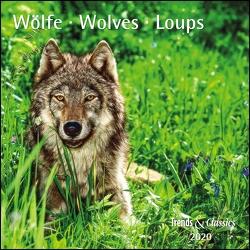Wölfe Wolves 2020 – Broschürenkalender – Wandkalender – mit herausnehmbarem Poster – Format 30 x 30 cm von DUMONT Kalenderverlag