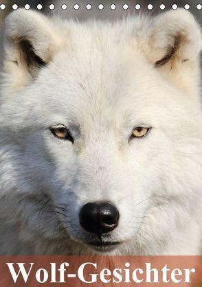 Wolf-Gesichter (Tischkalender 2018 DIN A5 hoch) von Stanzer,  Elisabeth