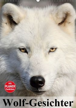 Wolf-Gesichter (Wandkalender 2019 DIN A2 hoch) von Stanzer,  Elisabeth
