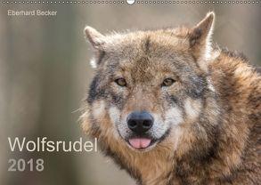 Wolfsrudel (Wandkalender 2018 DIN A2 quer) von Becker,  Eberhard