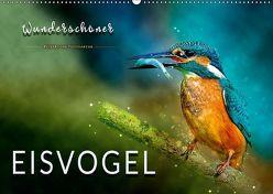 Wunderschöner Eisvogel (Wandkalender 2019 DIN A2 quer) von Roder,  Peter