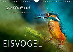 Wunderschöner Eisvogel (Wandkalender 2019 DIN A4 quer) von Roder,  Peter