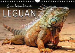 Wunderschöner Leguan (Wandkalender 2018 DIN A4 quer) von Roder,  Peter