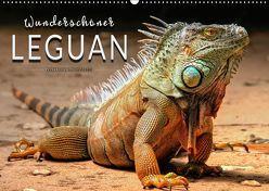 Wunderschöner Leguan (Wandkalender 2019 DIN A2 quer) von Roder,  Peter