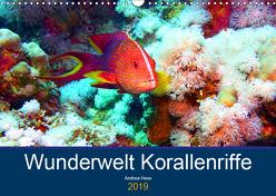 Wunderwelt Korallenriffe (Wandkalender 2019 DIN A3 quer) von Hess,  Andrea