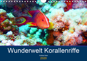 Wunderwelt Korallenriffe (Wandkalender 2020 DIN A4 quer) von Hess,  Andrea