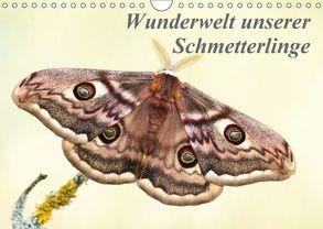 Wunderwelt unserer Schmetterlinge (Wandkalender 2018 DIN A4 quer) von Pelzer (Pelzer-Photography),  Claudia