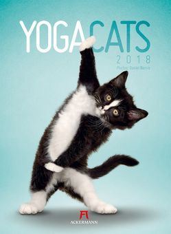 Yoga Cats 2018 von Borris,  Daniel