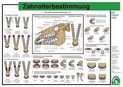 Zahnalterbestimmung von Deutsche Reiterliche Vereinigung e.V. (FN), Hertsch,  Bodo, Spenlen,  Uwe