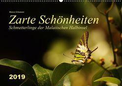 Zarte Schönheiten Schmetterlinge der Malaiischen Halbinsel (Wandkalender 2019 DIN A2 quer) von Schumann,  Bianca