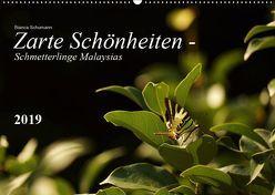 Zarte Schönheiten – Schmetterlinge MalaysiasCH-Version (Wandkalender 2019 DIN A2 quer) von Schumann,  Bianca
