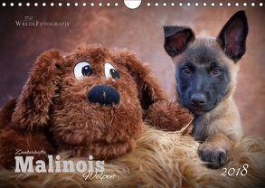 Zauberhafte Malinos Welpen – Belgische Schäferhunde (Wandkalender 2018 DIN A4 quer) von Wrede,  Martina
