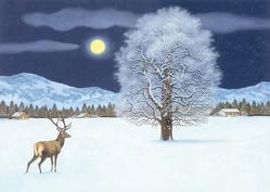 Zauberhafte Winternacht Adventskalender von Mueller,  Thomas