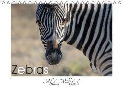 Zebras – Afrikas Wildpferde (Tischkalender 2019 DIN A5 quer)