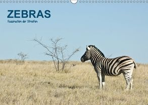 Zebras – Faszination der Streifen (Wandkalender 2018 DIN A3 quer) von Krebs,  Thomas
