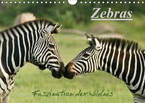 Zebras – Faszination der Wildnis (Wandkalender 2018 DIN A4 quer) von Haase,  Nadine
