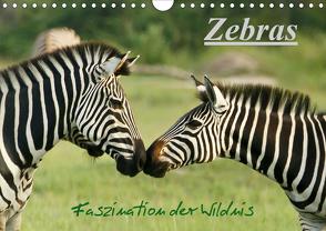 Zebras – Faszination der Wildnis (Wandkalender 2020 DIN A4 quer) von Haase,  Nadine