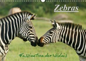 Zebras – Faszination der Wildnis (Wandkalender 2021 DIN A3 quer) von Haase,  Nadine