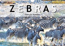 Zebras, Stars in Streifen (Wandkalender 2020 DIN A4 quer) von Styppa,  Robert