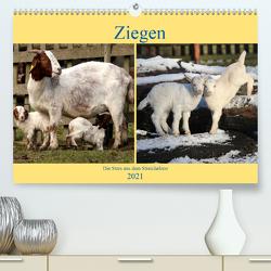 Ziegen – Die Stars aus dem Streichelzoo (Premium, hochwertiger DIN A2 Wandkalender 2021, Kunstdruck in Hochglanz) von Klatt,  Arno