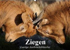 Ziegen. Lustige Ausbruchskünstler (Wandkalender 2019 DIN A2 quer) von Stanzer,  Elisabeth